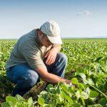 Ingeniero agrónomo, aptitudes necesarias