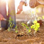 Horticultura: perfil y plan de estudios