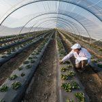 Administración agropecuaria, todo lo que necesitas saber